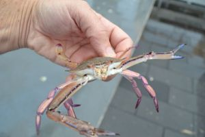 Somebody is crabby.
