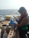 Preserving Plankton