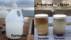 Plankton preserved in Formalin