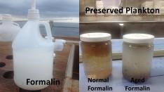 Plankton preserved in Formalin