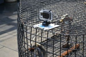 GoPro Camera on Chevron Trap