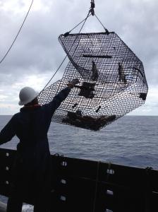 Pisces crew retrieving the trap.