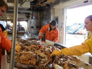 Sorting through the bottom trawl
