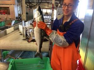 Alyssa is holding an Atka Mackerel
