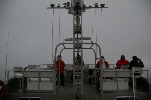 Many hours are spent perched atop the flying bridge when marine mammal and bird observations take place.