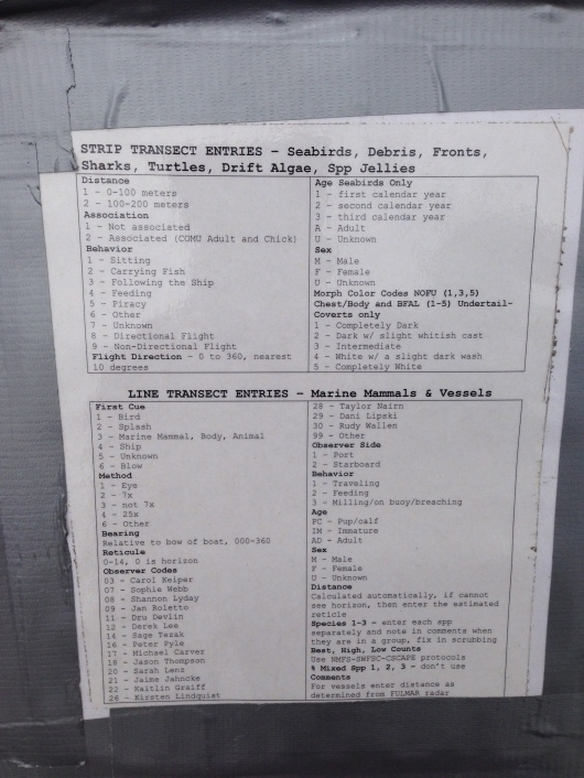 Here are the codes that are called out while monitoring marine mammals and birds. As you can see, there is a lot of information that is called out during a spotting.