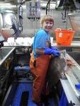 Bluntnose Stingray Dasyatis say 108 centimeters, 18 kg