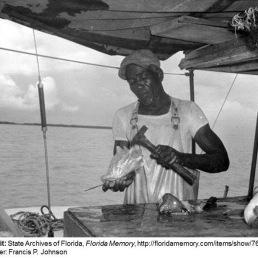 Conch harvesting 1959