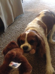 My puppy, Bella, attacks her new Kodiak Bear as I reflect on my time in and around Kodiak, aboard the Rainier.