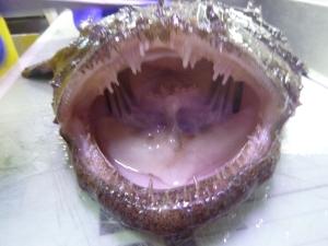 Goosefish mouth