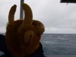 Toro noticed that the seas were rough.