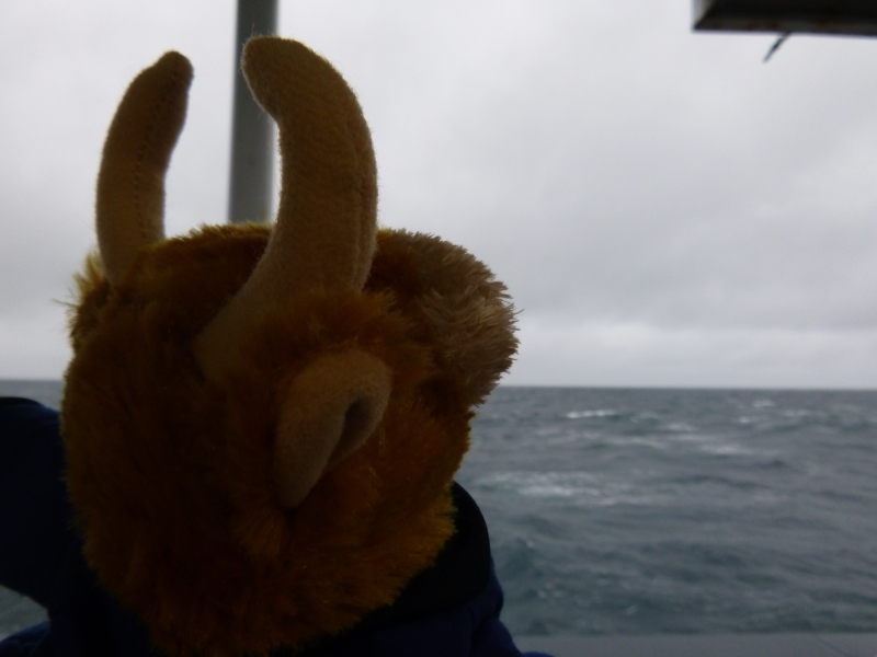 Toro noticed that the seas were rough.