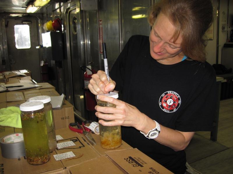Kim labeling a sample