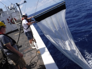 Hosing down the Neuston net to collect plankton in the codend.