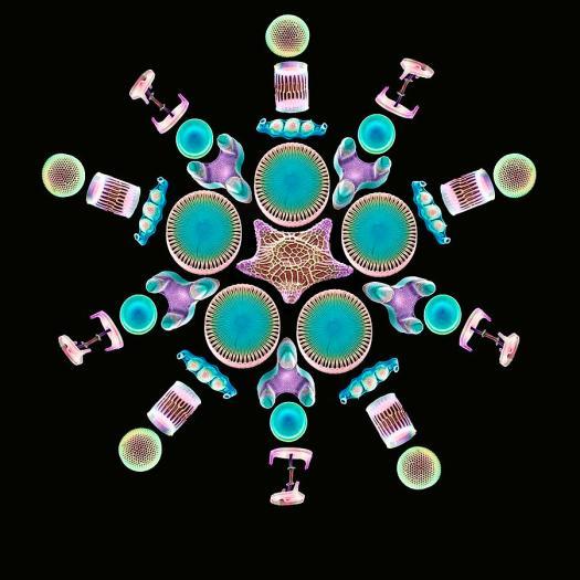 Diatom Frustules. Photo by: 3-diatom-assortment-sems-steve-gschmeissner