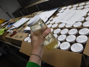 Jars are labeled and boxed for analysis in the lab.