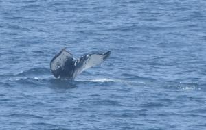 Whale #1