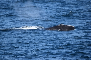Whale #3