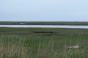 Nauset Marsh