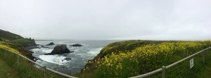 A panoramic view from Yaquina Point, gray whales can often be seen from the Point on their migration route, one of the longest in the animal kingdom.