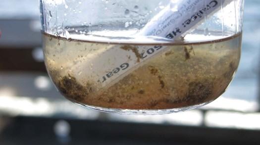 Baby Bongo Sample in ethanol. Photo by: DJ Kast