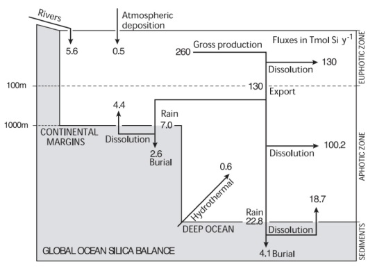 Marine Silica Cycle by Sarmiento and Gruber 2006