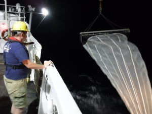 Deploying the Neuston net