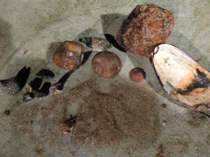 Substrate samples from one of our dredges; sand, rocks/gravel/pebbles,