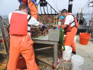 That's Burton, on the right, sorting through a dredge with lots and lots of sand dollars.