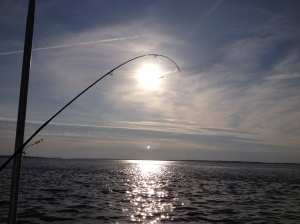 Flounder Fishing in the Bay