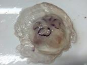 Moon jelly (Aurelia labiata)