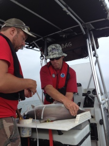 Ben and I working up a shark on board the boat. Photo courtesy of Nathan Keith.