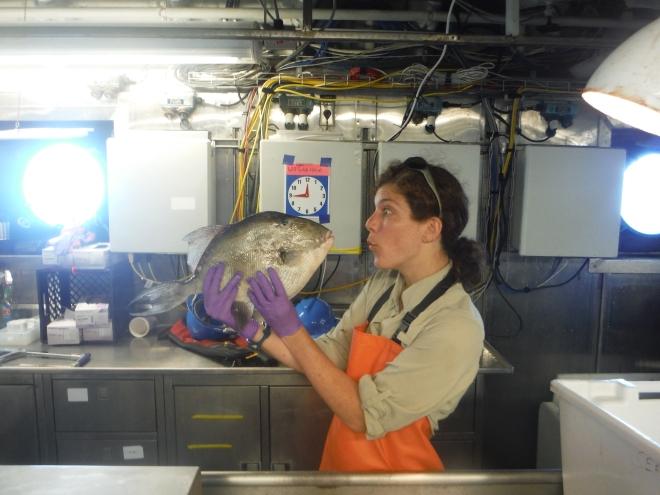 I love triggerfish!
