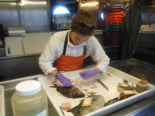 removing tissue samples from a fish