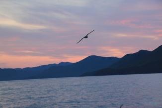 Birds are always abundant after a trawl