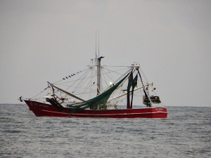 Shrimping Boat