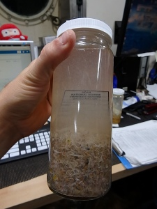 Neuston Plankton