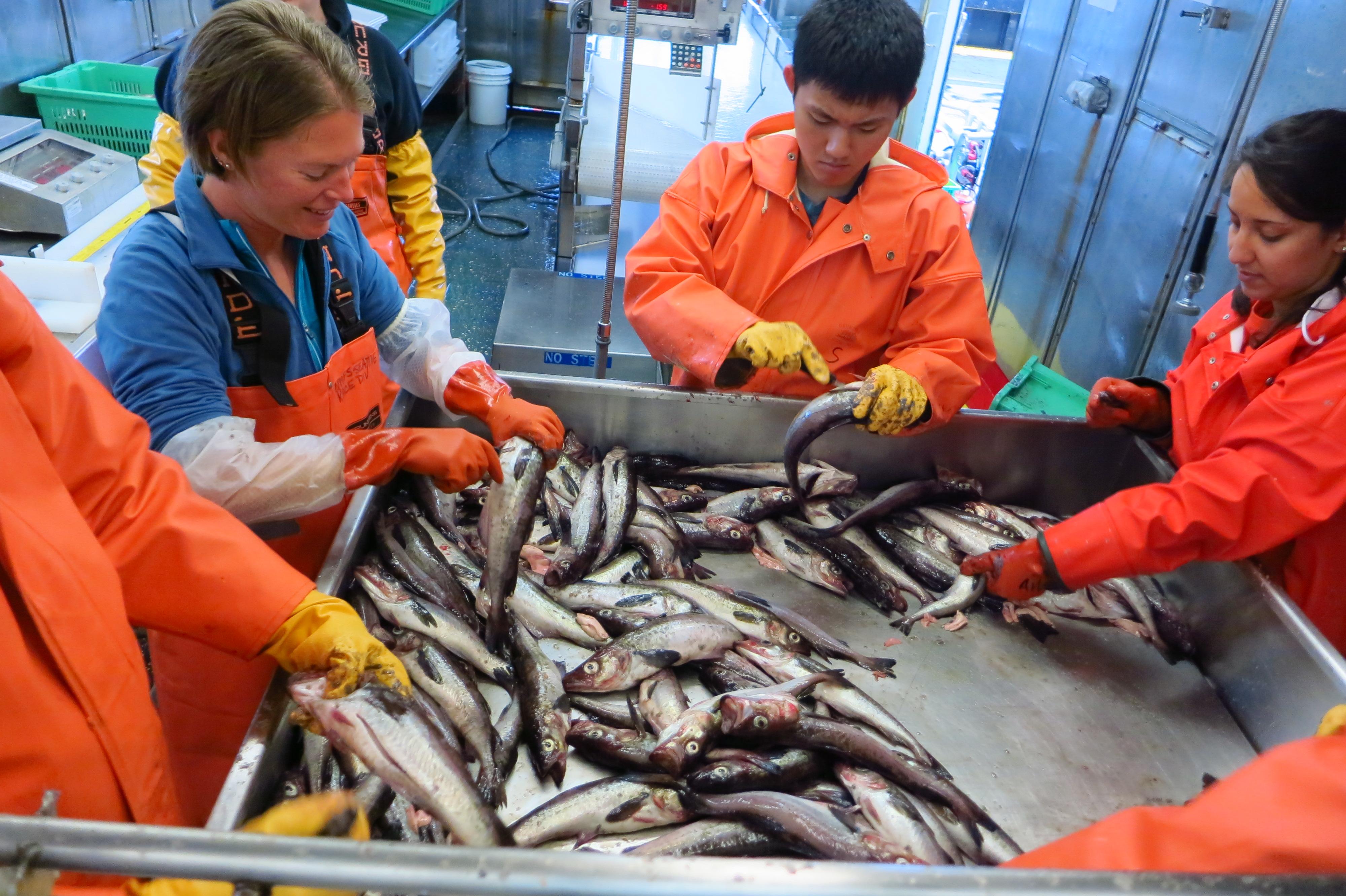 Tasak Whale Bone Wire Management