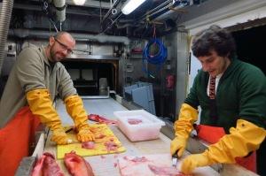 Filleting some rockfish