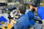Robert and Derek looking at krill flatfish larvae under the microscope