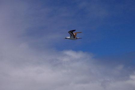 Temoshok 10-13-01 bird