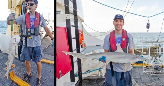 Weighing a bonnethead shark