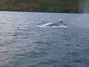 One whale was just 20 feet from the launch!