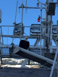 Where's Qanuk? Sitting on the ship's radar above the bridge!