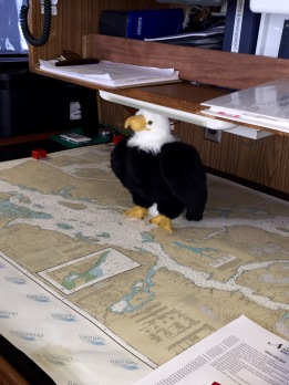 Qanuk reads a navigational chart