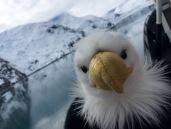 Qanuk Takes a Selfie large