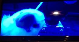 Qanuk as seen through the ROV camera!