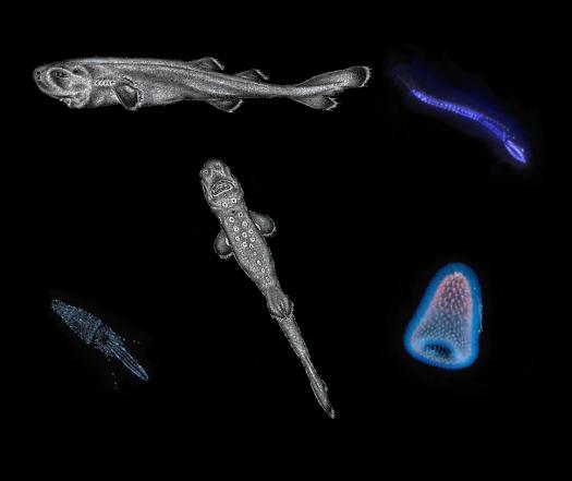 bioluminescent creatures