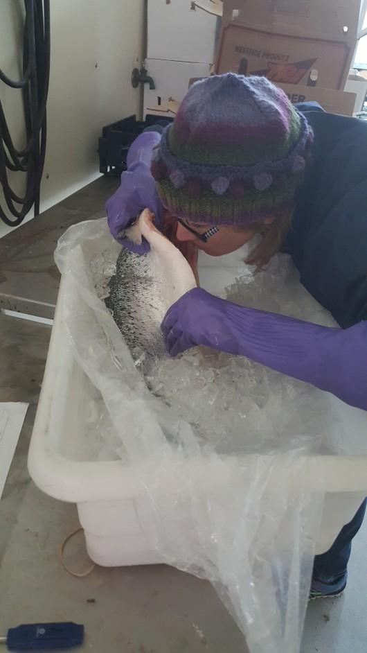 susan sniffing fish
