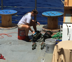 Kate scrubbing sensors to remove biofoul.